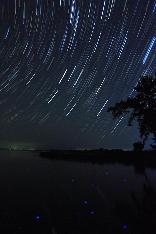 星の軌道とウミホタル